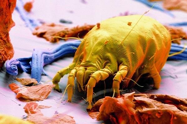 AIT bei Hausstaubmilben-Allergie: Neue Wege gehen (20. November)