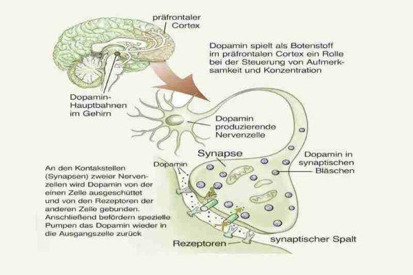 Aufmerksamkeitsstörung (ADHS) im Erwachsenenalter – Teil 1 Diagnostik