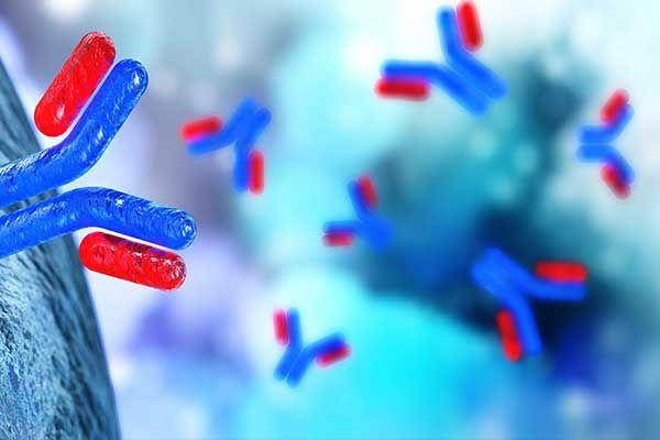 Neutralisierende Antikörper in der Botulinum Neurotoxin-Therapie