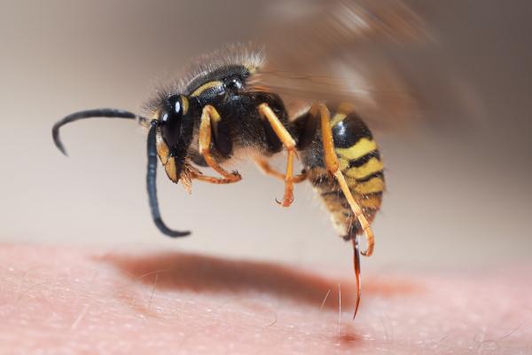 Diagnostik der Insektengiftallergie unter besonderer Berücksichtigung des Stellenwerts kutaner Testungen