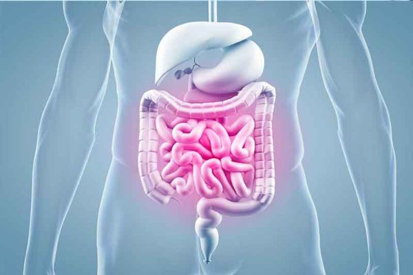 Ernährung bei chronisch-entzündlichen Darmerkrankungen (CED)