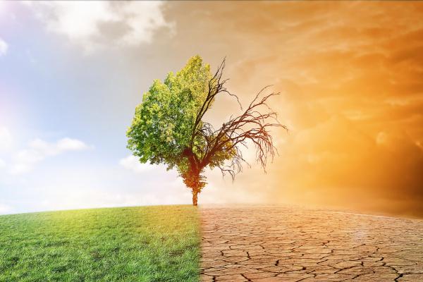 Klimawandel: Eine Herausforderung für Allergiker?