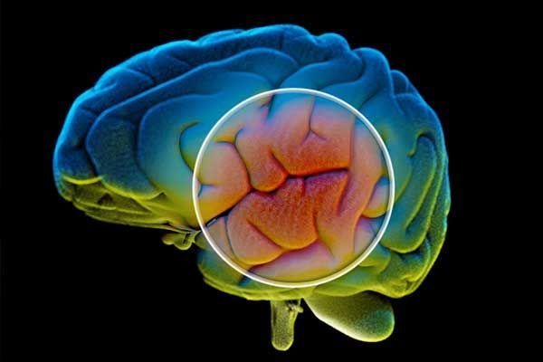 Parkinson – Aspekte zur Pathophysiologie und Therapie des mittleren und Spätstadiums